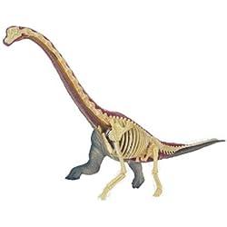 Three-dimensional puzzle 4D VISION animal anatomy No.24 Brachiosaurus Anatomy Model