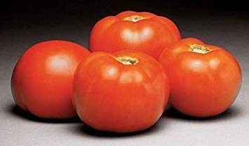 ANVIN Germination Seeds:500 Seeds of Better Vfn Hybrid - Tomatoes Early Season