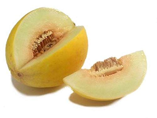 Canary Melon -Tangy and Mildly Sweet. Flavors of banana and pineapple!(10 - Seeds) (Banana Melon Seeds)