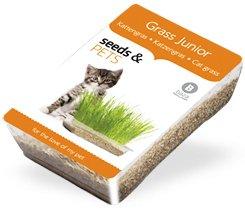 Kit de Cultivo hierbas para Gatos Especial Cachorros