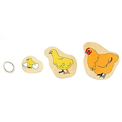Danni Toddler Montessori Wood Toy Science Toys Life Cycle of Hen Egg Hatching Grow Up Puzzles Jingsaw Preschool Infant: Toys & Games