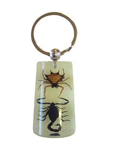Real Spiny Spider & Black Scorpion Glow In The Dark Lucite Keychain