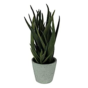 "15.5"" Aloe in Cement Pot Green (pack of 1) 37"