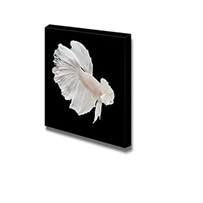 Canvas Prints Wall Art - Betta Big Ear Fish on Black Background | Modern Wall Decor/Home Decoration Stretched Gallery Canvas Wrap Giclee Print & Ready to Hang - 12