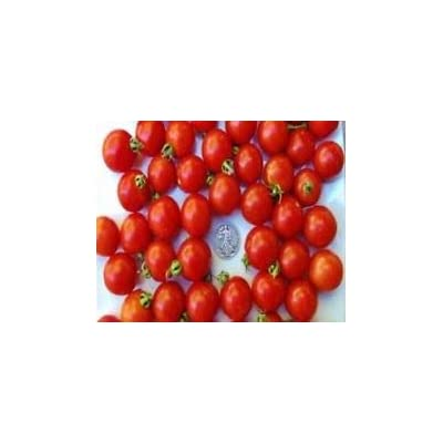 Tommy Toe - Best Tasting Cherry Tomato Ever - 40 Seeds per Packer : Garden & Outdoor