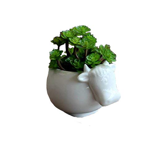 Wish you have a nide day white cow Ceramic Flower Planters / Succulent Plant Pots (cow)