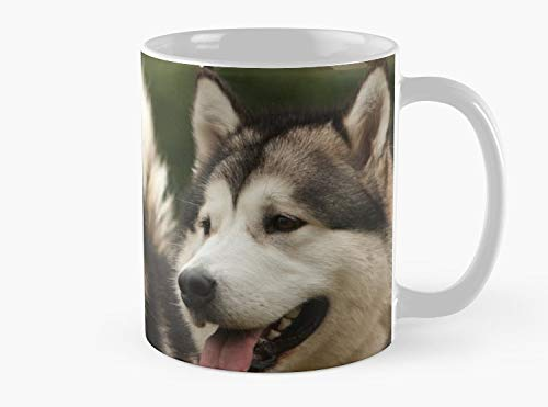 Alaskan Malamute Mug, Standard Mug Mug Coffee Mug - 11 oz Premium Quality printed coffee mug - Unique Gifting ideas for Friend/coworker/loved ones