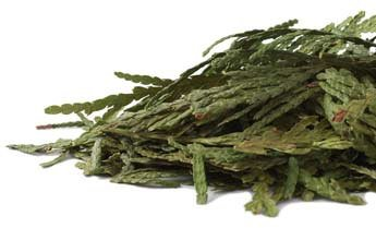 Bulk Herbs: Cedar Tips (Wild Harvested)