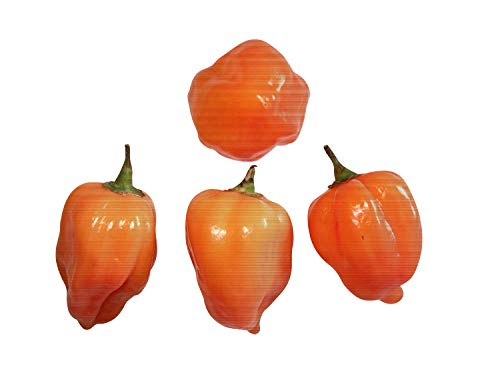 10 x Habanero Orange Seeds -Samenchilishop-Seeds- -Ghost, used for sale  Delivered anywhere in Canada