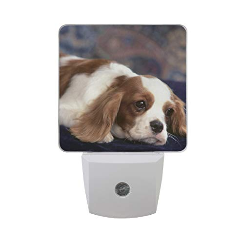 OuLian Night Light Cute King Charles Spaniel Puppy Dogs Led Light Lamp for Hallway, Kitchen, Bathroom, Bedroom, Stairs, DaylightWhite, Bedroom, Compact