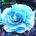 shopmeeko 50 pcs/Bag Rare Blue Carnation Plants Dianthus caryophyllus Seeds Colourful Flowers Beautiful Indoor Plants 100% True Plants: White