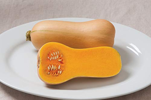 - David's Garden Seeds Squash Winter Butterscotch PMR 2213 (Orange) 50 Non-GMO, Hybrid Seeds