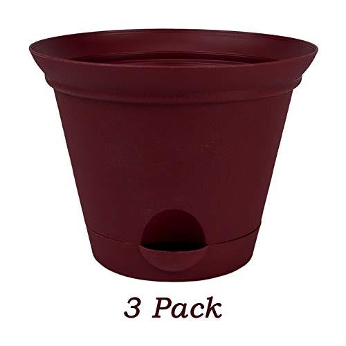 Salsa Flower - 3 Pack Planter of 9.5