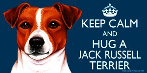 Jack Russell Terrier Dog Gift - 'KEEP CALM' LARGE colourful 4' x 8' MAGNET - High Quality flexible magnet for indoor or outdoor use for your Fridge, Car, Caravan or use on any flat metal surface -Water proof and UV resistant. Car-Pets Ltd