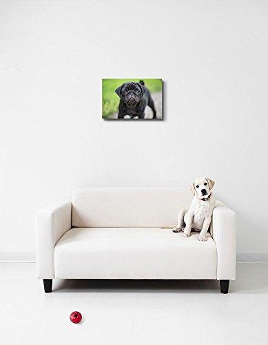 Little Black Pug Puppy Dog Cute Pet Animal Photograph Wall Decor
