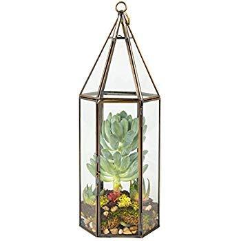 Deco Glass Terrarium Succulent & Air Plant (Tall) [並行輸入品] B07R1RLN9G