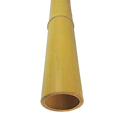 Lewis Hyman 0446125CP Bamboo Natural Pole (12 Pack), Piece