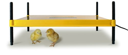 Brinsea Products Brooder for Warming Newly Hatched Chicks and Ducklings
