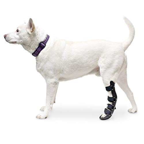 Walkin' Pet Splint for Dogs | Canine Rear Foot Splint Helps Brace Lower Back Limbs