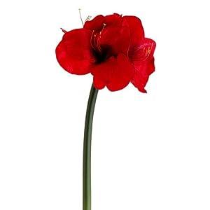 27″ Amaryllis Spray Red (Pack of 12)