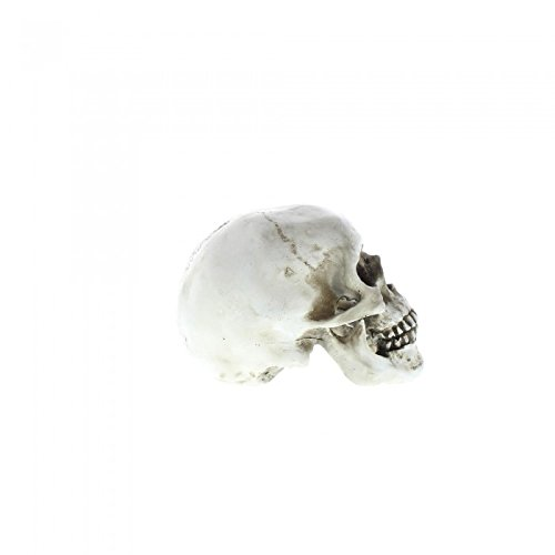 Eastwind Gifts 10017190 Skull Decorative Accent Tom /& Co.
