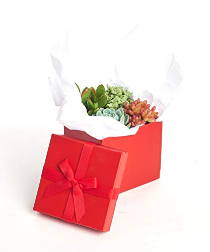 Seed Sun Wreath - Shop Succulents Good Juju Succulent Gift Box 2