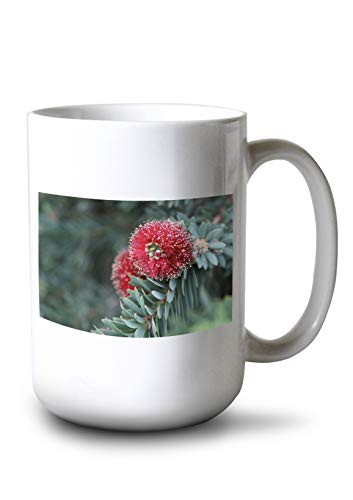 - Lantern Press Red Dwarf Bottle Brush Flower - Photography A-94594 (15oz White Ceramic Mug)