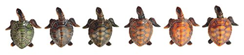 3 Inch Various Colored Sea Turtles Figurines Set of 6 3 Multicolored 3 Inch Various Colored Sea Turtles Figurines Set of 6 3 Multicolored GSC StealStreet SS-G-63088