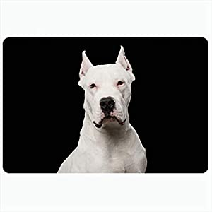 Ahawoso Bath Rug for Bathroom Non Slip Mats 20x30 Inches Purebred Dogo Black Argentino Front Dog Isolated Guard Cute Breed Mammal Animals Looking Wildlife Plush Decor Doormat Non Slip Backing Mat 1