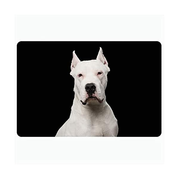 Ahawoso Bath Rug for Bathroom Non Slip Mats 20x30 Inches Purebred Dogo Black Argentino Front Dog Isolated Guard Cute Breed Mammal Animals Looking Wildlife Plush Decor Doormat Non Slip Backing Mat 1