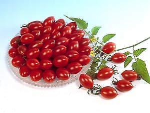Tomato Sugary 100 Seeds Need More? Ask