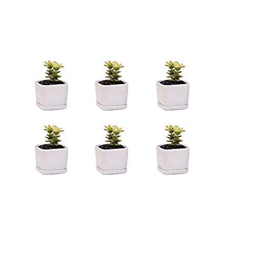 Mini 6 set of 2 inch square Modern Minimalist White Ceramic Succulent mini Planter Pot/Window Box with Saucer (6, 2inch)