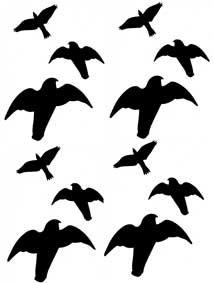 12 Vogel Aufkleber Greifvogel Wintergarten Fenster Schutz Vogelaufkleber Warnvogel Vogel Silhouetten Vogelschutz