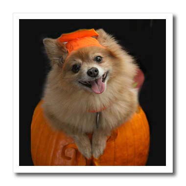 3dRose Sandy Mertens Halloween Designs - Happy Pomeranian Dog on Jack o Lantern Halloween, 3drsmm - 10x10 Iron on Heat Transfer for White Material (ht_290230_3) ()