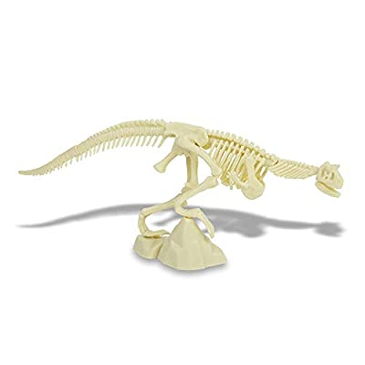 Dinosaur Excavation Kits for Kids, Mega Fossil Dig Kit Excavate Different Dinosaur Real Fossils Great Science Gift for Dinosaur and Archeology Enthusiasts of Any Age, Dinosaur DIY Toys for Kids (A): Kitchen & Dining