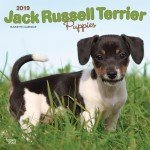 Rock Russel Jack Terriers - Quality 2019 Jack Russel Terrier Puppies Calendar with Free Rock Music MEMOROBILIA (Key Chain, Pen,Magnet,Card ETC.) Calendar Planner,Calendar Wall,Pocket, Monthly,DO IT All,Gallery Edition