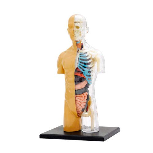 Nature Discovery Range 37 Parts with Stand and Guide Book Multi Ages 8 to Adult Thames /& Kosmos 260830 Anatomy Model Build Your own Human Body