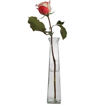 Amazon Dtsc Imports Clear Glass Bud Vase 11 Tall New Home