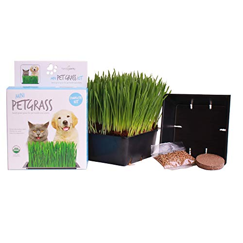 Handy Pantry Organic Cat Grass Kit | Includes 1 Tray, 1 Soil Puck, and Non GMO Wheatgrass Seed | A Healthy Treat for Cats, Dogs, Rabbits, and More