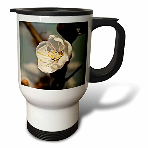 3dRose Alexis Photography - Flowers Sakura Beautiful - Japanese apricot flower in the evening light. Closeup, warm colors - 14oz Stainless Steel Travel Mug (tm_286669_1) by 3dRose