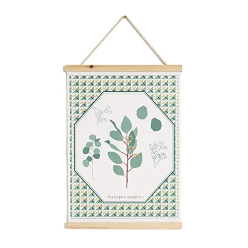 (La Redoute Interieurs Tavula Eucalyptus Print Hanging Canvas Green Size One Size )
