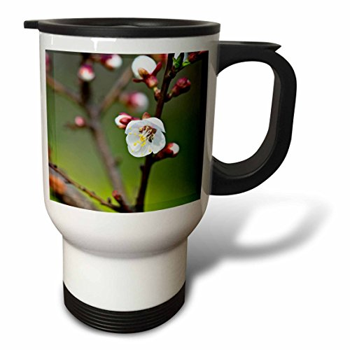 3dRose Alexis Photography - Flowers Sakura Beautiful - White Japanese apricot flower on a twig. Sunshine, green background - 14oz Stainless Steel Travel Mug (tm_286526_1) by 3dRose