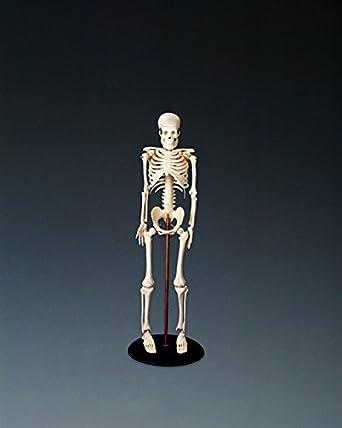 Anatomische Diagramm 5060094800035 My First Skelett Tiny Tim ...