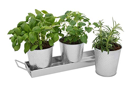 Saratoga Home Galvanized Planter Pots with Tray Set - Indoor Herb Garden - Utensil Caddy - Use on Windowsill or as Outdoor Flower Pots for Succulents Wedding Table Decorations Snacks