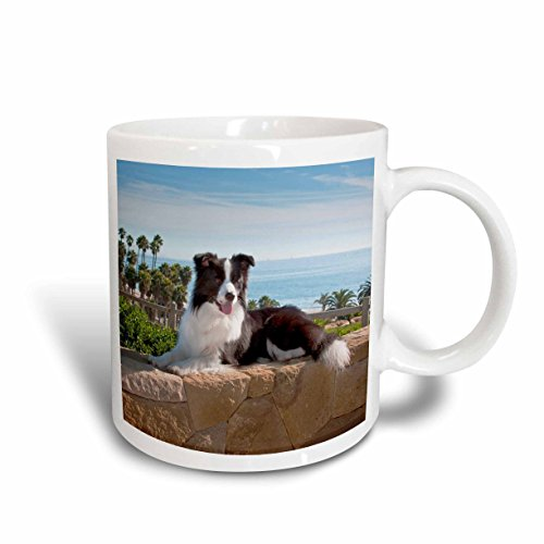 3dRose mug_88790_1 A Border Collie Dog US05 ZMU0102 Zandria Muench Beraldo Ceramic Mug, 11 oz, White