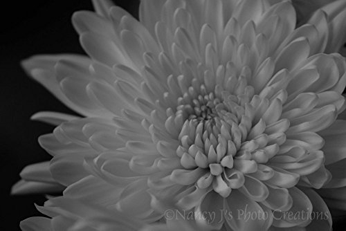 Flower Photography Dramatic Black and White Large Art Contemporary Home Decor 5x7 8x12 12x18 16x24 20x30 Stunning Variations Natural Dark and Artistic Accents Film Grain Effect