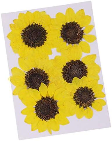 Baoblaze 6個入り ひまわり型 ブックマーク作成 押し花 手芸素材 装飾品 乾燥した花 装飾 魅力 レモンイエロー