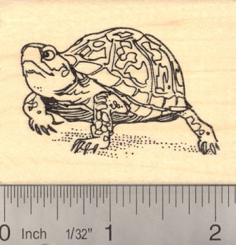Eastern Box Turtle Rubber Stamp (North American)
