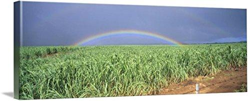 Rainbow Over Sugar Cane - Imagekind Wall Art Print entitled Hawaii, Maui, Double Rainbow Over Sugarcane Field, by Design Pics | 10 x 3