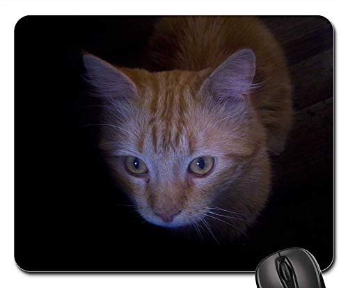 Mouse Pads - Cat in The Dark Cat
